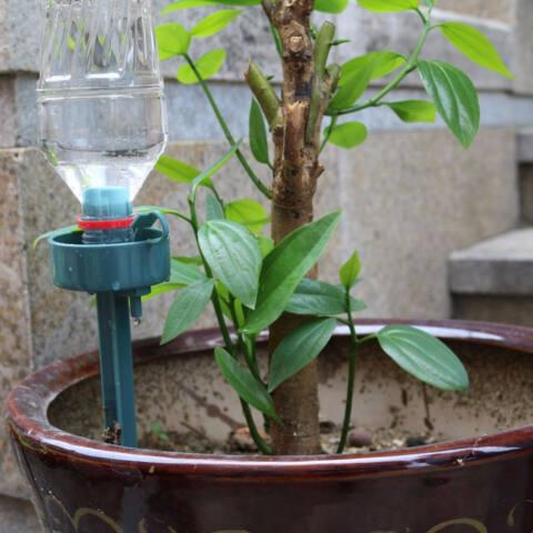 Automata állítható csepegtető készülék növényekhez
